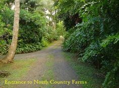 NORTH COUNTRY FARMS ~ B & B COTTAGES ~ AN ECO TOURISM DESTINATION