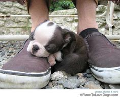 Dad's shoe is as good a place as any