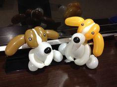 造型氣球 米格魯 狗 beagle balloon twisting