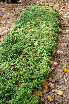 Winter Gardening or Cover Crops