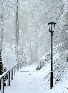 snowy snowy snowy