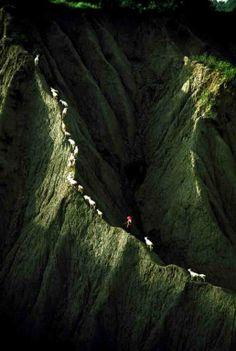 Herding goats, Moon World #Taiwan 月世界