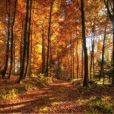 Fall..my favorite season.