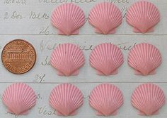 Pink Scallop Shells for jewelry