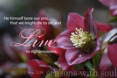 Scripture Art Nature Photography / Hellebore by SeasonswithSoul, $20.00