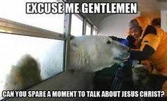 funny animals, sooo funni, laughabl humor, funni anim, polar bears