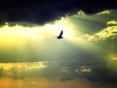 soaring high above