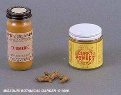 Turmeric and Pancreatitis