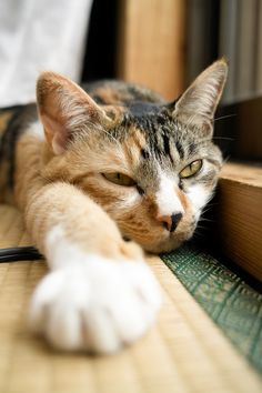 """""""Cats keep their claws sharp because they know a purr may not be enough."""" --Author Unknown"""