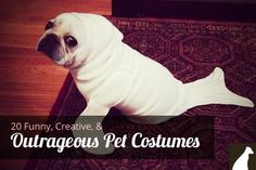 20 Funny, Creative, and Outrageous Pet Costumes --> http://go.homesalive.ca/blog/bid/319329/20-Funny-Creative-Outrageous-Pet-Costumes