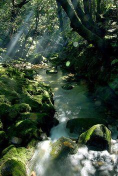 Serene.  Meditation.  Peace.