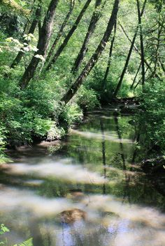 Tryon Creek II by quiet nymphs, via Flickr