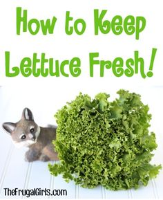 Kitchen Tip: How to Keep Lettuce Fresh! ~ from TheFrugalGirls.com - this simple little produce trick works like a charm! #thefrugalgirls
