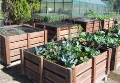 Onion Bin Planters