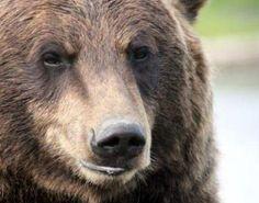 Mmmm... #bear #funny