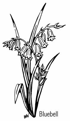 Bluebell Flower Online Coloring Page Blue Bell Flowers