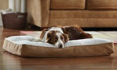 Groupon - $29 for an Animal Planet Large Sherpa Bed ($49.99 List Price). Free Shipping and Free Returns. in Online Deal. Groupon deal price: $29.0.00