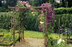 CLEMATIS 'JACKMANII' AND ROSA 'GOLDEN SHOWERS' ON PERGOLA. MANSION, CASTLE OF TOUFFOU