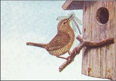 Amazing Burgess Bird Book Companion-links, coloring pages, calls