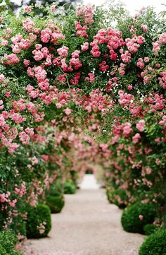 Walk among roses.