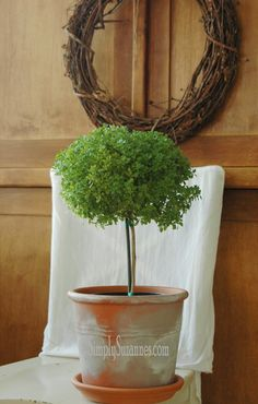 Simply Suzanne's AT HOME: Savour . . . a Greek basil tree basil tree