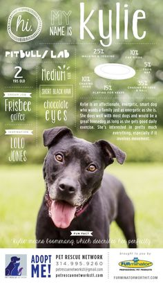 Hi. My name is Kylie. I'm looking for my forever home. #pet #adoption #poster #dog #design #infographics