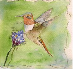 """Allen's Hummingbird"" - ""Have you ever observed a hummingbird moving about in an aerial dance among the flowers? -a living prismatic gem... It is a creature of such fairy-like loveliness as to mock all description."" W.H. Hudson Watercolor - Gail Van Camp"
