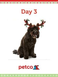 Here is today's 12 Days of Pinterest featured image (12/5/2012). Pin this Doggy Antler Ears image to one of your boards for a chance to win a 500 dollar Petco shopping spree, plus 500 dollar Petco Gift Card for a Petco Foundation shelter/rescue of your choice. Winner will be announced tomorrow (12/6/2012) between 12pm and 5pm Pacific Time.