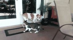 Let me get the door for you... the doors, kitty cats, anim, blog, funni gif, dog, friend