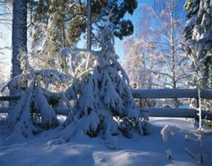 Tips to prevent winter damage to evergreens