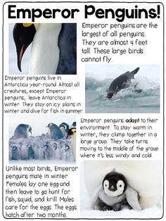 Animals In Winter articles!!!! GREAT for small group!!!