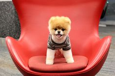 Celebrity spotting onboard one of our flights today! A canine celeb, to be exact. We just love Boo...