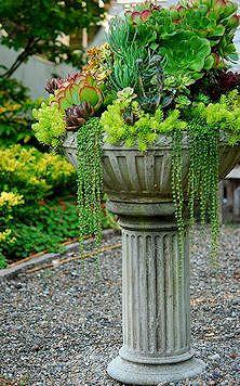 Succulents in a pedestal bowl