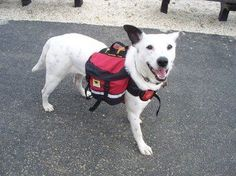 Dog Evacuation Bug Out Bag Pack List & Training Tips To Use It