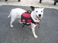 Dog bug out bag