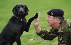 military dogs, soldier, anim, hero, working dogs, militari dog, dog show, dog stuff, friend