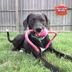 May 2014 Pet of the Month Contest Winner