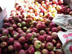 Apples galore | Yelp
