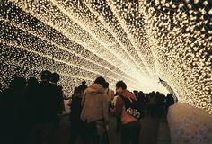 art museum, winter, japan, northern lights, christmas lights, place, light show, flowers garden, botanical gardens