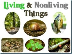 Living & Non-Living Thing Powerpoint