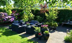 Garden in Denmark in the summer