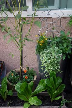 Growing plants in the shade