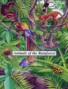 all about animals of the rainforest
