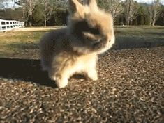 Look at this bunny. Look at its little feet. You're welcome. (Gif)