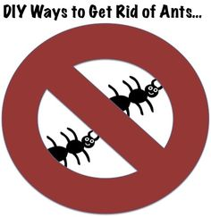 How to get rid of ants. No more ant spray here!!