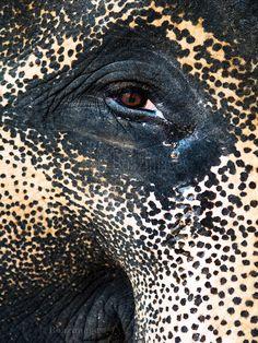 ELEPHANT by BoazImages