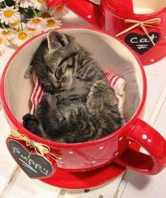 12 Epic Cute Kittens