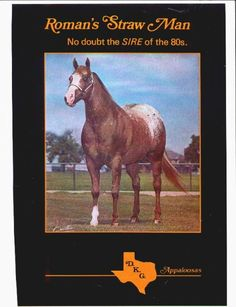 Roman's Straw Man, 1971-1991, ApHC Hall of Fame in 1998, amazing record, his get did it all!  Eight time winner of National and World Get of Sire classes.