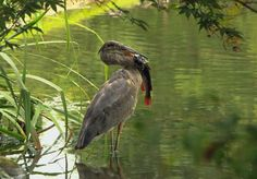 Lynn Whitmore captured a Great Blue Heron dining on EJC Arboretum pond catfish. Mother Nature on exhibit at JMU's living sciences laboratory, Vote for your favorite picture entered in the September Photo Contest: http://ejcarboretum.wordpress.com/