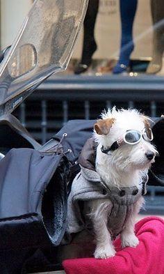 Dog in Paris France